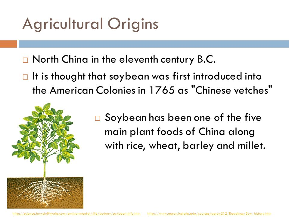 Agricultural Origins  Eastern Mediterranean around 6000 B.C.