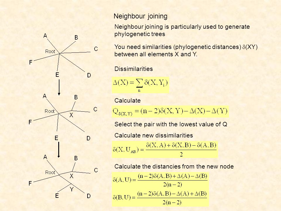 Neighbour joining Neighbour joining is particularly used to generate phylogenetic trees Dissimilarities You need similarities (phylogenetic distances)  (XY) between all elements X and Y.