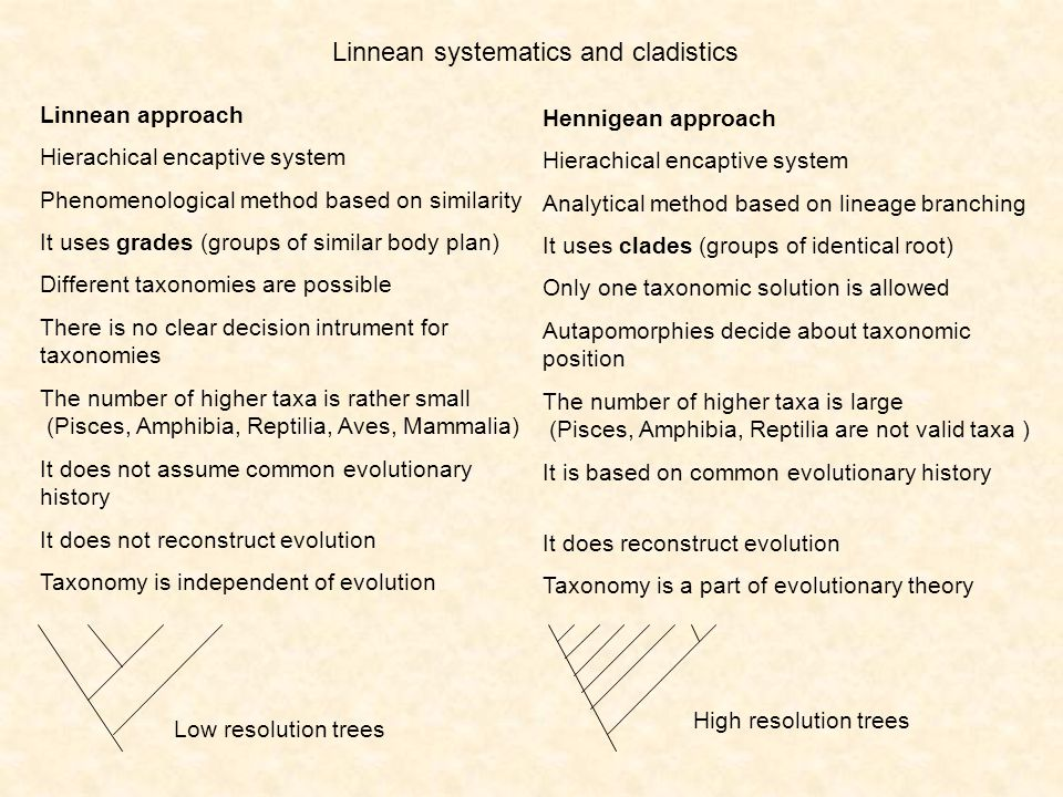 Linnean systematics and cladistics Linnean approach Hierachical encaptive system Phenomenological method based on similarity It uses grades (groups of similar body plan) Different taxonomies are possible There is no clear decision intrument for taxonomies The number of higher taxa is rather small (Pisces, Amphibia, Reptilia, Aves, Mammalia) It does not assume common evolutionary history It does not reconstruct evolution Taxonomy is independent of evolution Hennigean approach Hierachical encaptive system Analytical method based on lineage branching It uses clades (groups of identical root) Only one taxonomic solution is allowed Autapomorphies decide about taxonomic position The number of higher taxa is large (Pisces, Amphibia, Reptilia are not valid taxa ) It is based on common evolutionary history It does reconstruct evolution Taxonomy is a part of evolutionary theory Low resolution trees High resolution trees