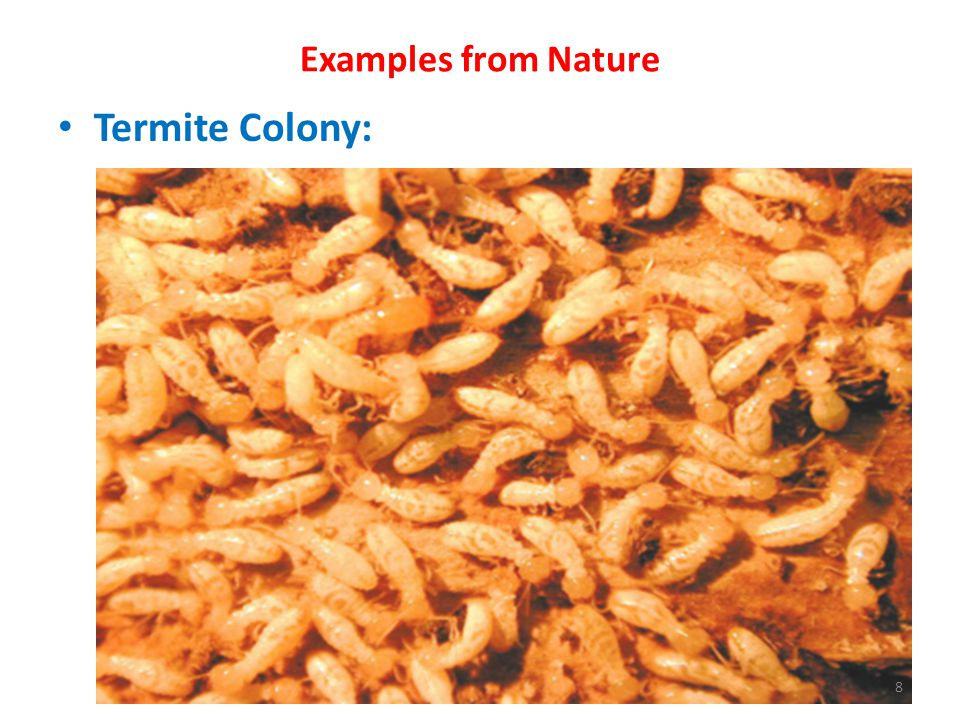 Examples from Nature Termite Colony: 8