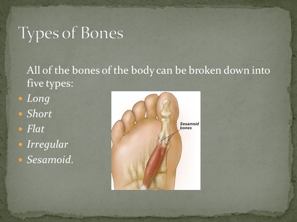 All of the bones of the body can be broken down into five types: Long Short Flat Irregular Sesamoid.