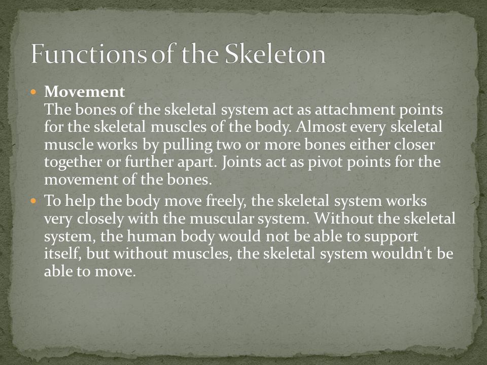 Movement The bones of the skeletal system act as attachment points for the skeletal muscles of the body.