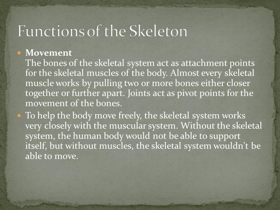 Storage: Bones have their own nerves and blood vessels.