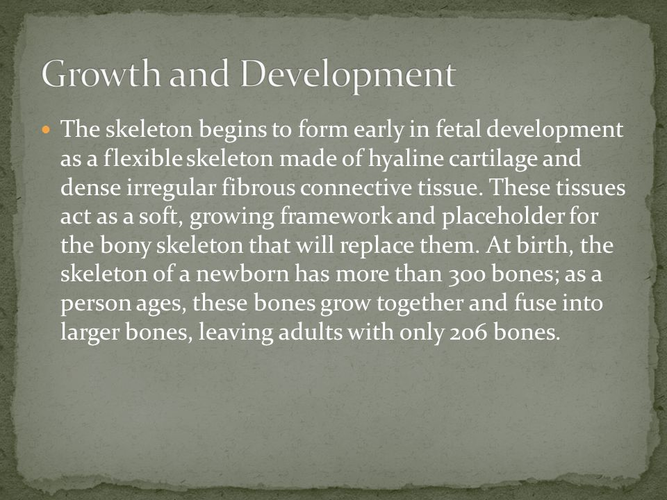 The skeleton begins to form early in fetal development as a flexible skeleton made of hyaline cartilage and dense irregular fibrous connective tissue.