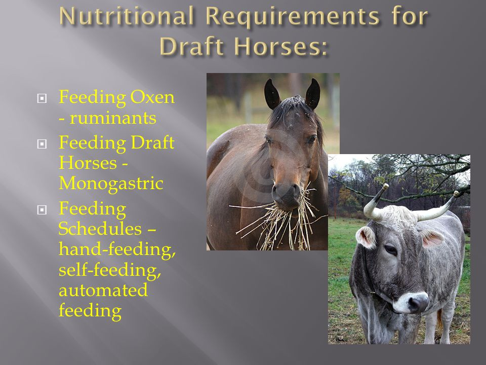 Feeding Oxen - ruminants  Feeding Draft Horses - Monogastric  Feeding Schedules – hand-feeding, self-feeding, automated feeding