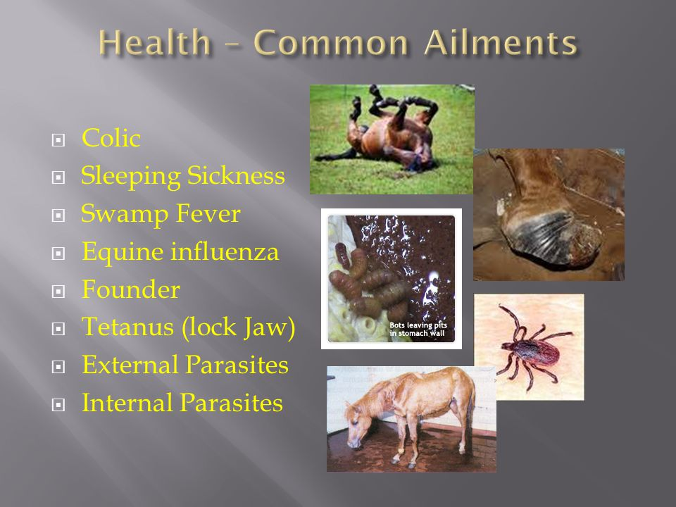  Colic  Sleeping Sickness  Swamp Fever  Equine influenza  Founder  Tetanus (lock Jaw)  External Parasites  Internal Parasites