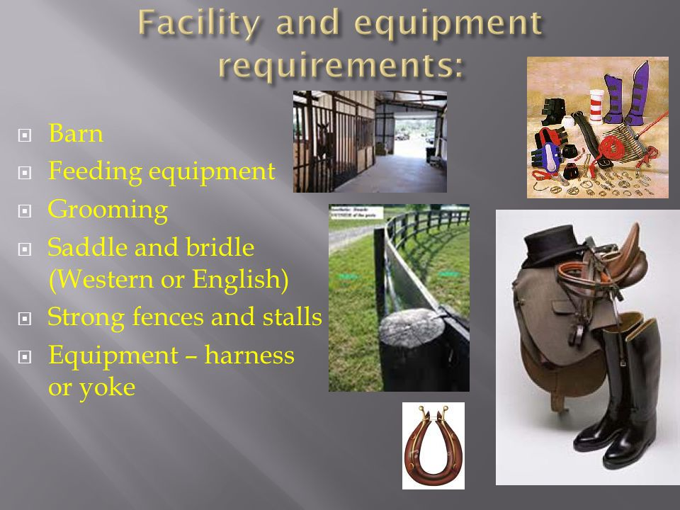  Barn  Feeding equipment  Grooming  Saddle and bridle (Western or English)  Strong fences and stalls  Equipment – harness or yoke