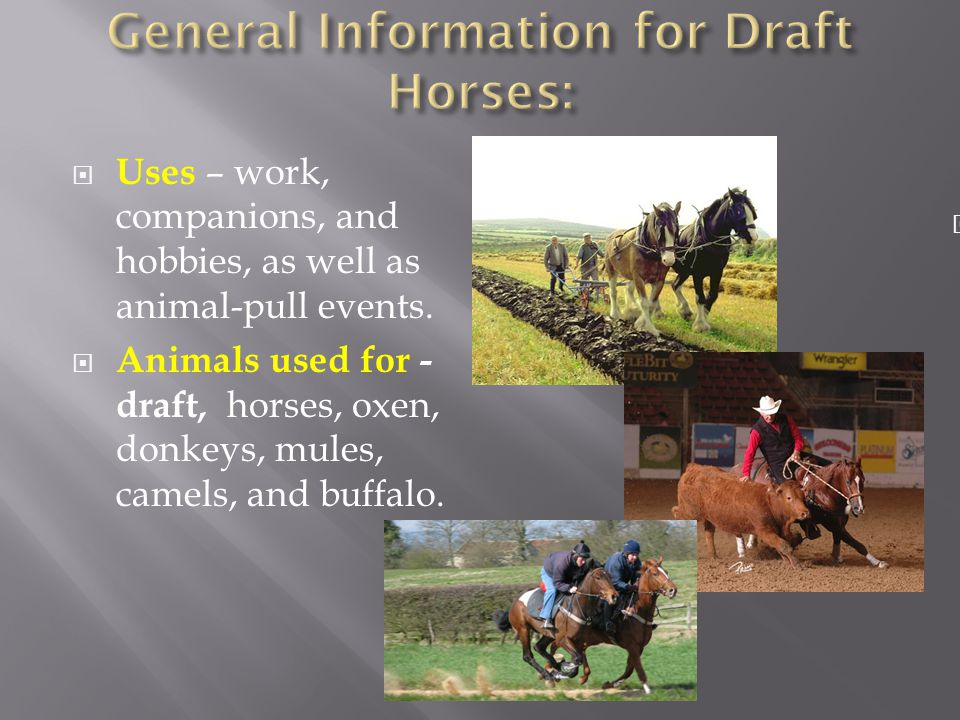  Uses – work, companions, and hobbies, as well as animal-pull events.