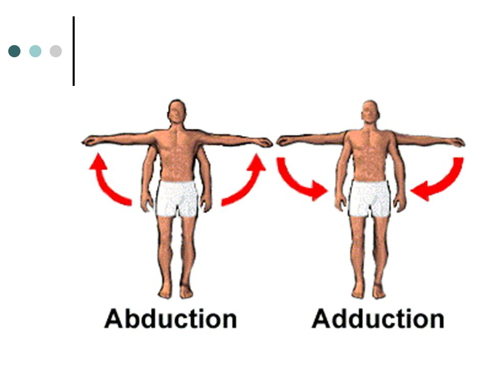 Movement in Joints 1. Abduction: movement away from the side of the trunk or midline of the body (ex. raising arms to the side; swinging leg to the si