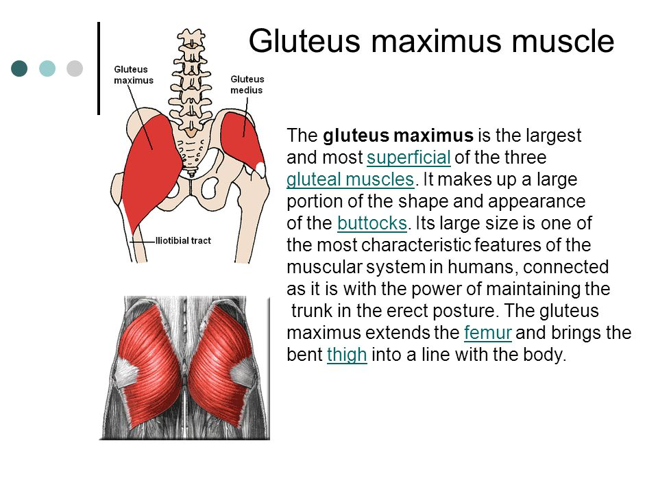 Rectus abdominis muscle is a paired muscle running verticallymuscle on each side of the anterior wall of the human abdomen. There are two parallel mus
