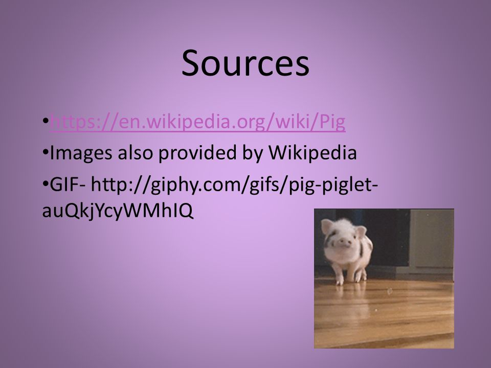 Sources https://en.wikipedia.org/wiki/Pig Images also provided by Wikipedia GIF- http://giphy.com/gifs/pig-piglet- auQkjYcyWMhIQ