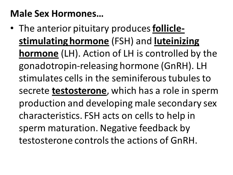 Male Sex Hormones… The anterior pituitary produces follicle- stimulating hormone (FSH) and luteinizing hormone (LH). Action of LH is controlled by the