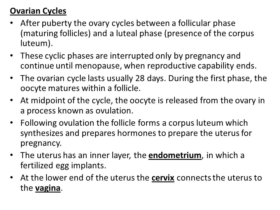 Ovarian Cycles After puberty the ovary cycles between a follicular phase (maturing follicles) and a luteal phase (presence of the corpus luteum). Thes