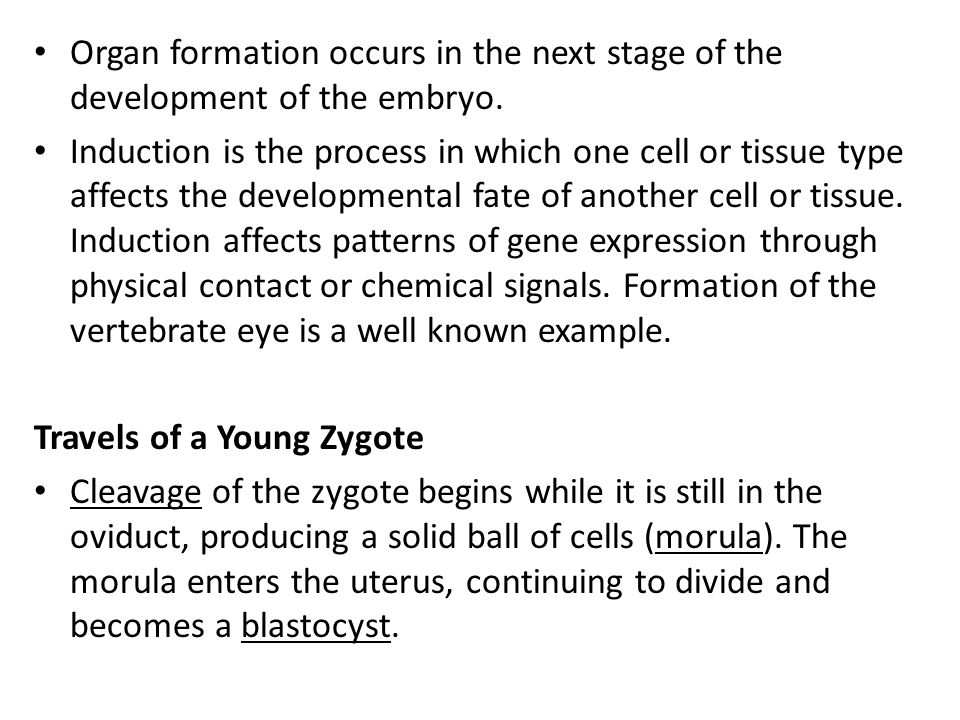 Organ formation occurs in the next stage of the development of the embryo. Induction is the process in which one cell or tissue type affects the devel