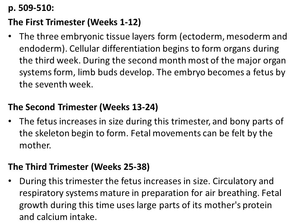 p. 509-510: The First Trimester (Weeks 1-12) The three embryonic tissue layers form (ectoderm, mesoderm and endoderm). Cellular differentiation begins