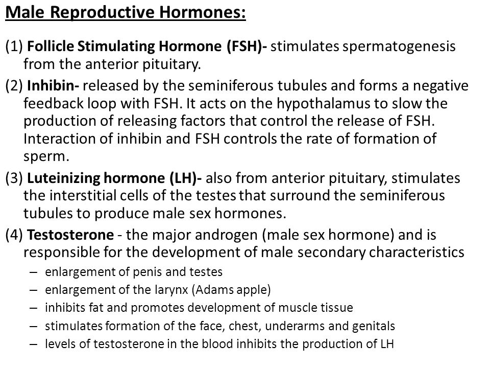 Male Reproductive Hormones: (1) Follicle Stimulating Hormone (FSH)- stimulates spermatogenesis from the anterior pituitary. (2) Inhibin- released by t