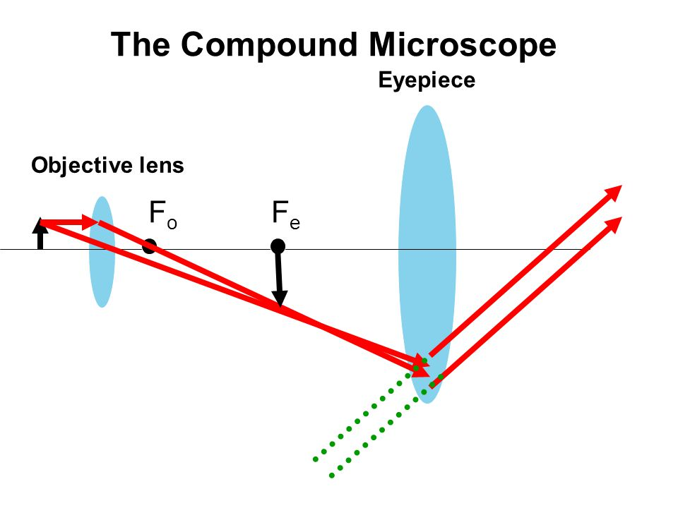 Objective lens Eyepiece FoFo FeFe The Compound Microscope