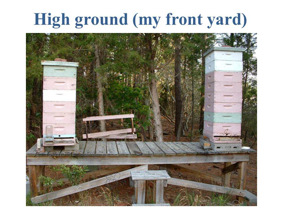 High ground (my front yard)