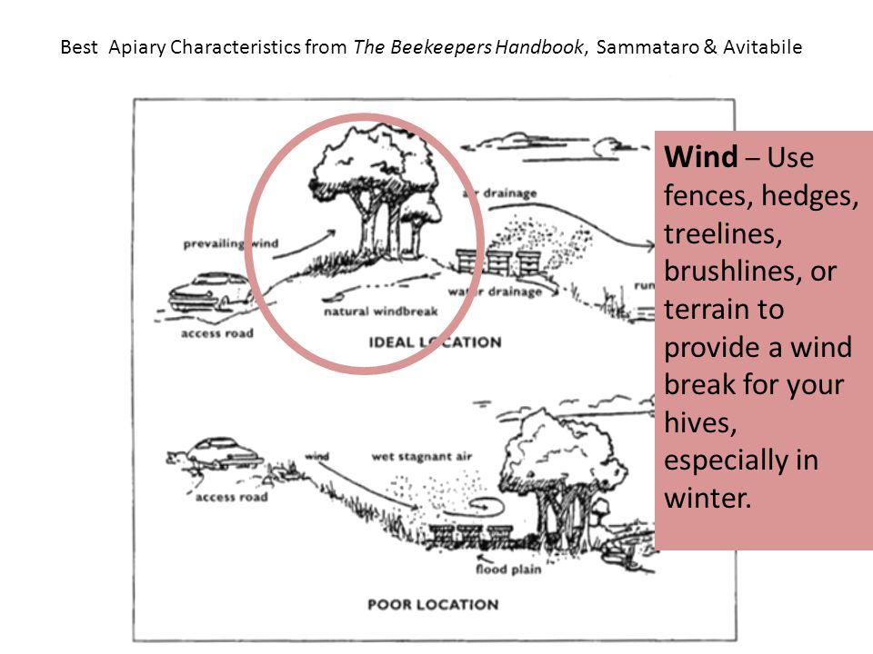 Best Apiary Characteristics from The Beekeepers Handbook, Sammataro & Avitabile Wind – Use fences, hedges, treelines, brushlines, or terrain to provid