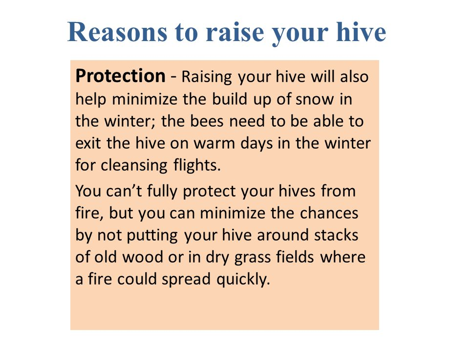Protection - Raising your hive will also help minimize the build up of snow in the winter; the bees need to be able to exit the hive on warm days in t