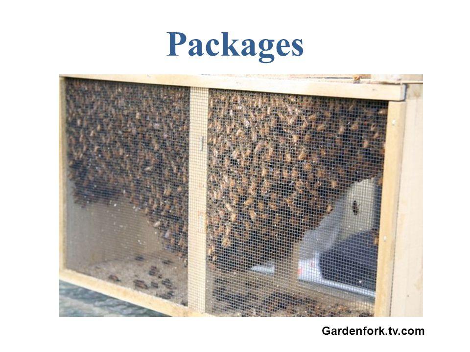 Gardenfork.tv.com