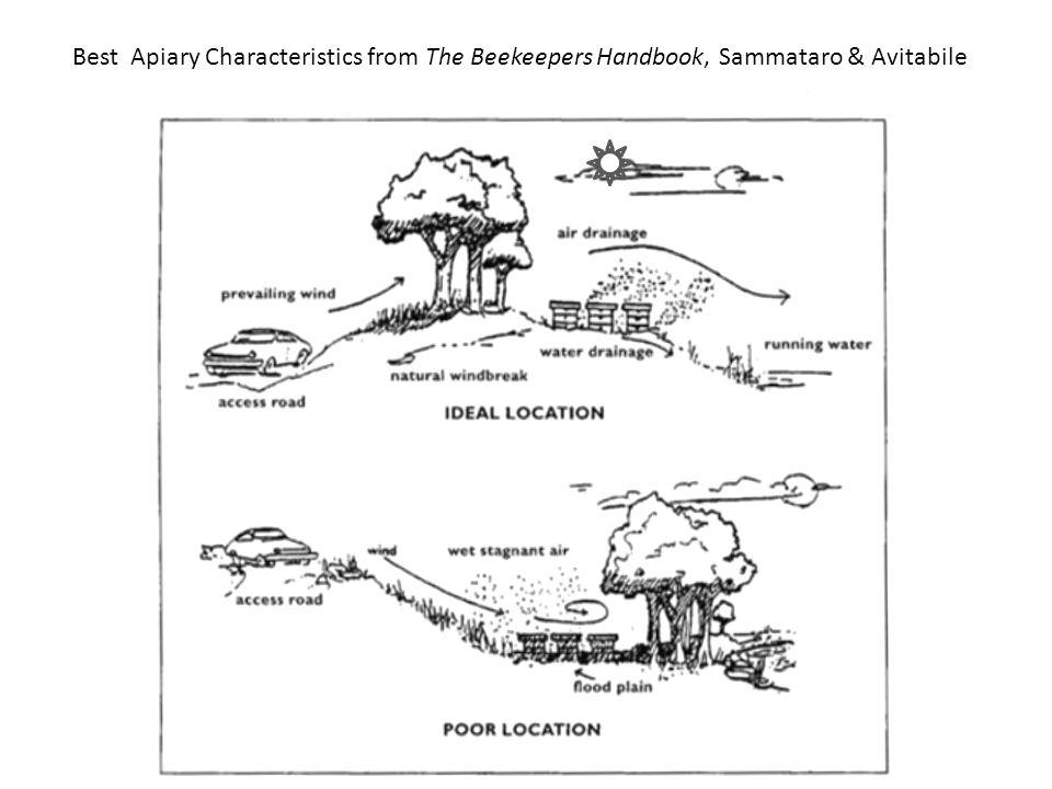 Best Apiary Characteristics from The Beekeepers Handbook, Sammataro & Avitabile