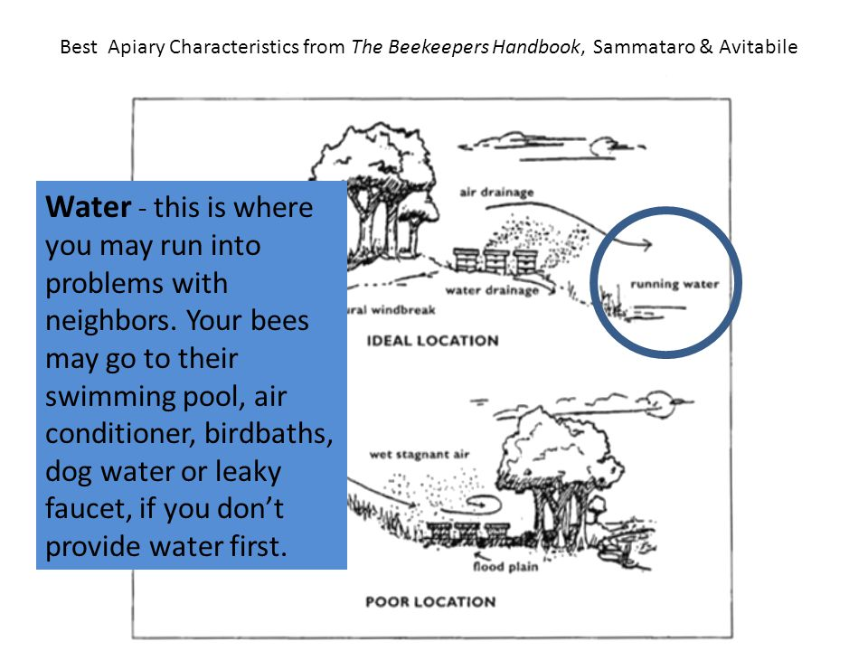 Best Apiary Characteristics from The Beekeepers Handbook, Sammataro & Avitabile Water – However, make sure your water source will not flood your hive area.