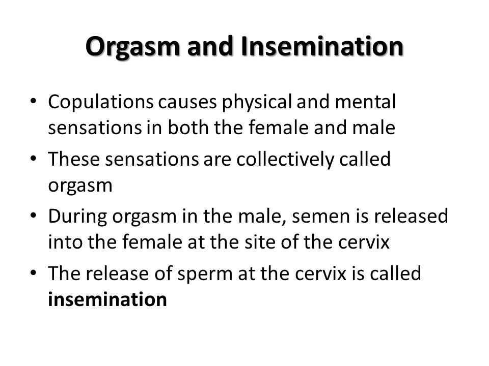 Orgasm and Insemination Copulations causes physical and mental sensations in both the female and male These sensations are collectively called orgasm During orgasm in the male, semen is released into the female at the site of the cervix The release of sperm at the cervix is called insemination
