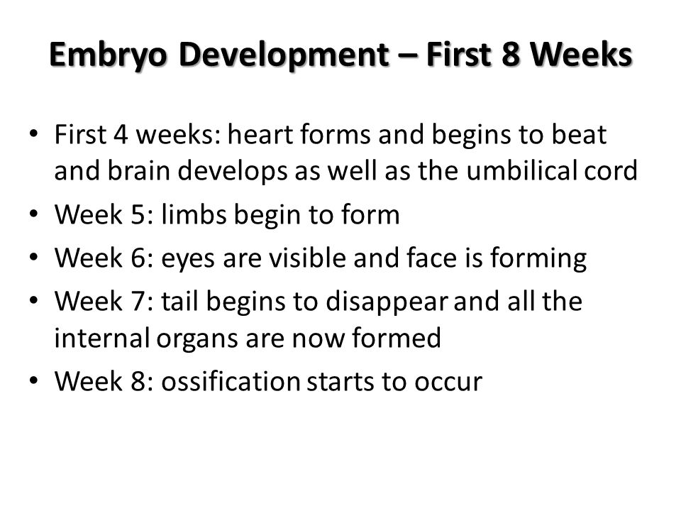 Embryo Development – First 8 Weeks First 4 weeks: heart forms and begins to beat and brain develops as well as the umbilical cord Week 5: limbs begin to form Week 6: eyes are visible and face is forming Week 7: tail begins to disappear and all the internal organs are now formed Week 8: ossification starts to occur