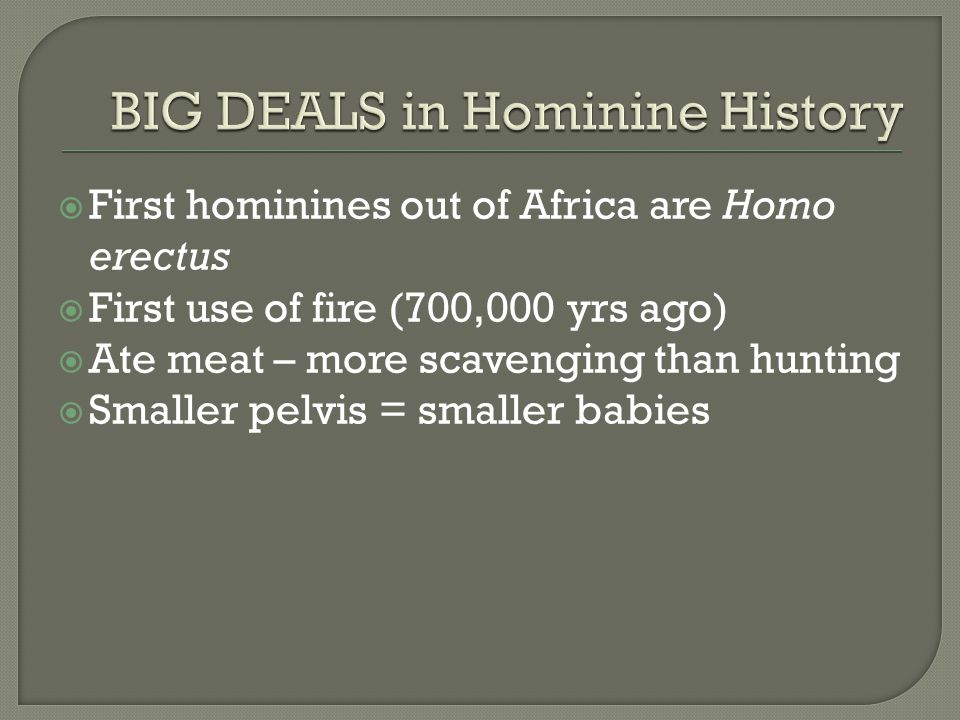  First hominines out of Africa are Homo erectus  First use of fire (700,000 yrs ago)  Ate meat – more scavenging than hunting  Smaller pelvis = smaller babies