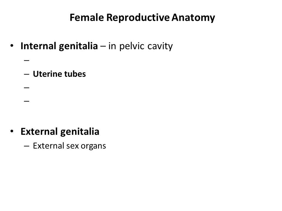 Female Reproductive Anatomy Internal genitalia – in pelvic cavity – – Uterine tubes – External genitalia – External sex organs