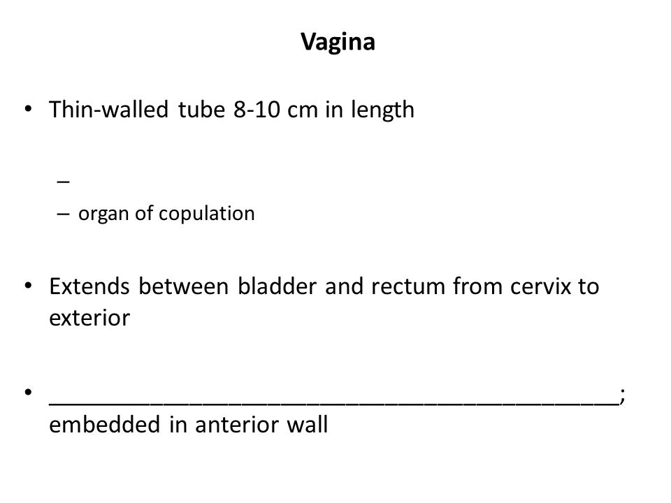 Vagina Thin-walled tube 8-10 cm in length – – organ of copulation Extends between bladder and rectum from cervix to exterior _________________________