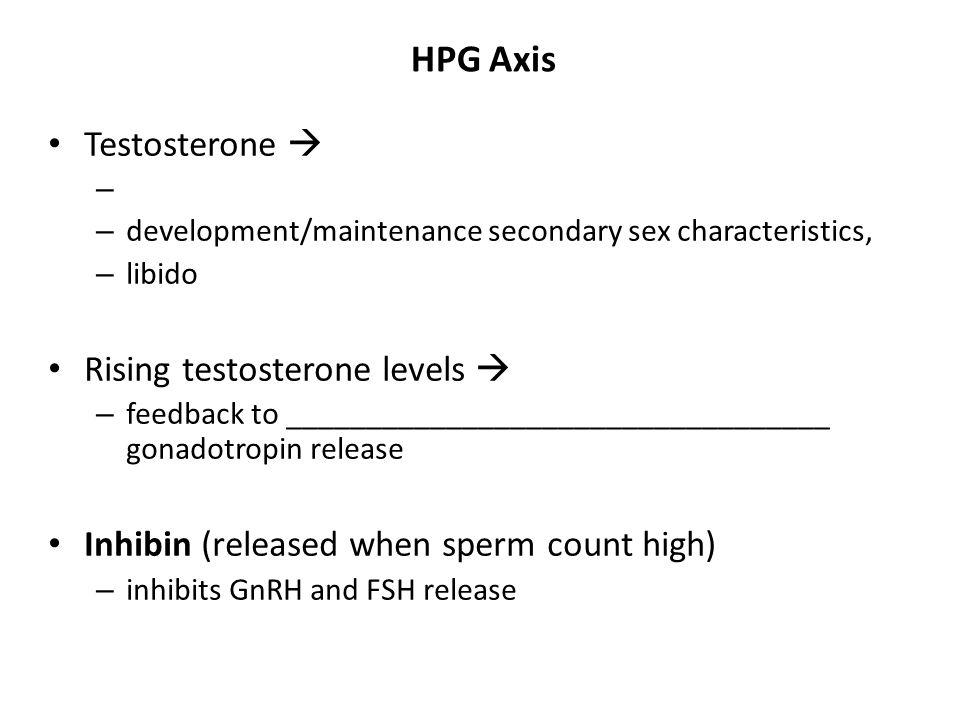 HPG Axis Testosterone  – – development/maintenance secondary sex characteristics, – libido Rising testosterone levels  – feedback to _______________