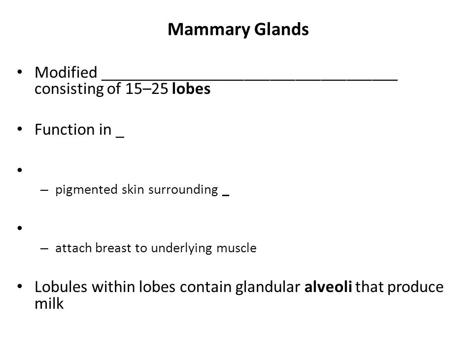 Mammary Glands Modified ___________________________________ consisting of 15–25 lobes Function in _ – pigmented skin surrounding _ – attach breast to