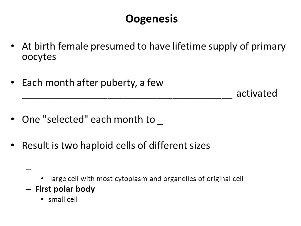 Oogenesis At birth female presumed to have lifetime supply of primary oocytes Each month after puberty, a few _______________________________________