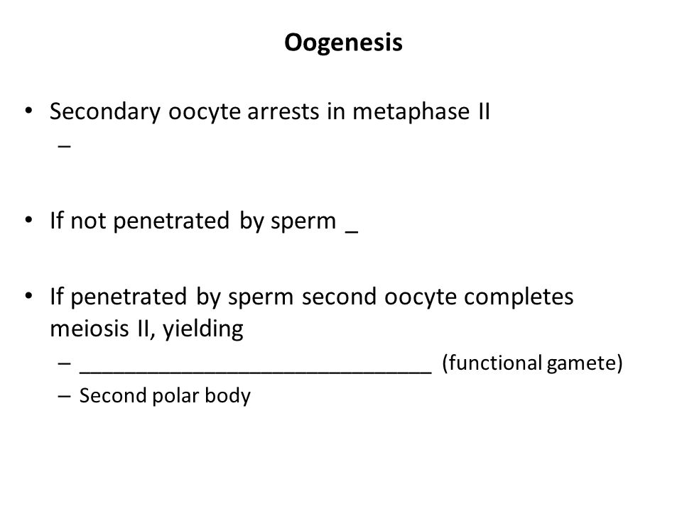 Oogenesis Secondary oocyte arrests in metaphase II – If not penetrated by sperm _ If penetrated by sperm second oocyte completes meiosis II, yielding