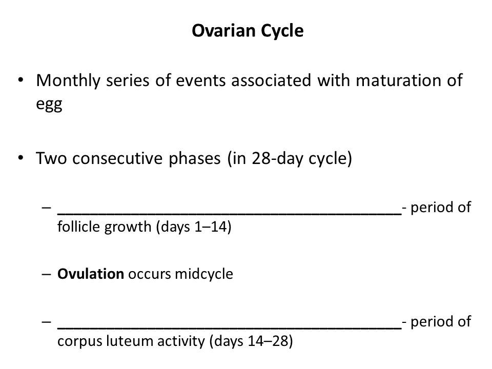 Ovarian Cycle Monthly series of events associated with maturation of egg Two consecutive phases (in 28-day cycle) – __________________________________