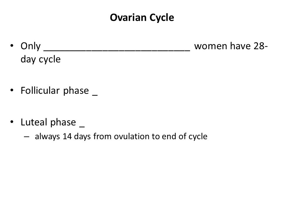 Ovarian Cycle Only ___________________________ women have 28- day cycle Follicular phase _ Luteal phase _ – always 14 days from ovulation to end of cy