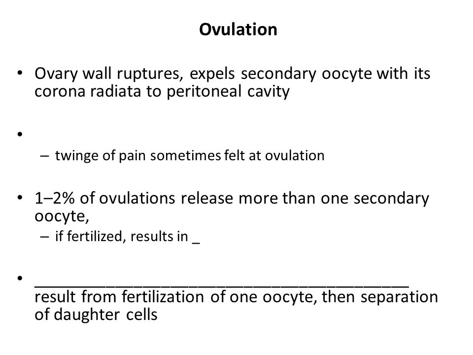 Ovulation Ovary wall ruptures, expels secondary oocyte with its corona radiata to peritoneal cavity – twinge of pain sometimes felt at ovulation 1–2%