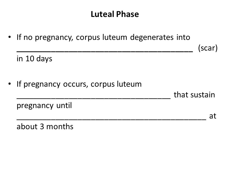 Luteal Phase If no pregnancy, corpus luteum degenerates into ________________________________________ (scar) in 10 days If pregnancy occurs, corpus lu