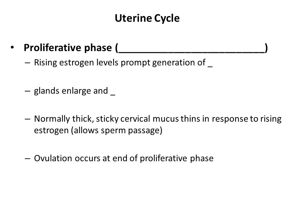 Uterine Cycle Proliferative phase (__________________________) – Rising estrogen levels prompt generation of _ – glands enlarge and _ – Normally thick