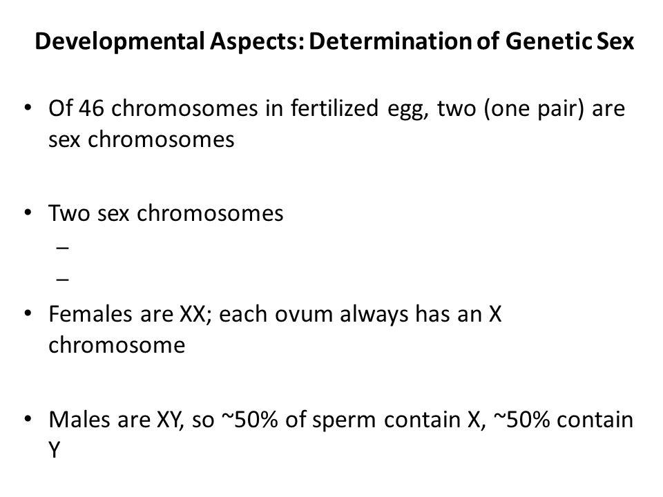 Developmental Aspects: Determination of Genetic Sex Of 46 chromosomes in fertilized egg, two (one pair) are sex chromosomes Two sex chromosomes – Fema