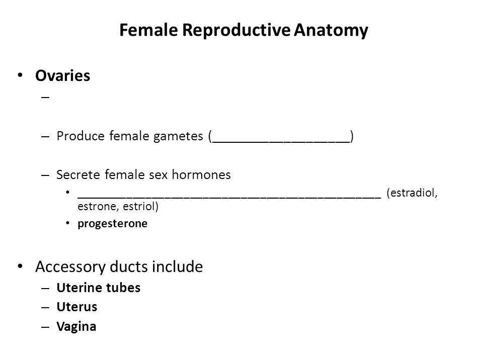Female Reproductive Anatomy Ovaries – – Produce female gametes (___________________) – Secrete female sex hormones ___________________________________