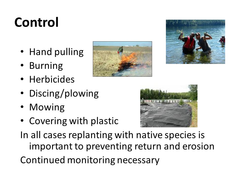 Control Hand pulling Burning Herbicides Discing/plowing Mowing Covering with plastic In all cases replanting with native species is important to preve