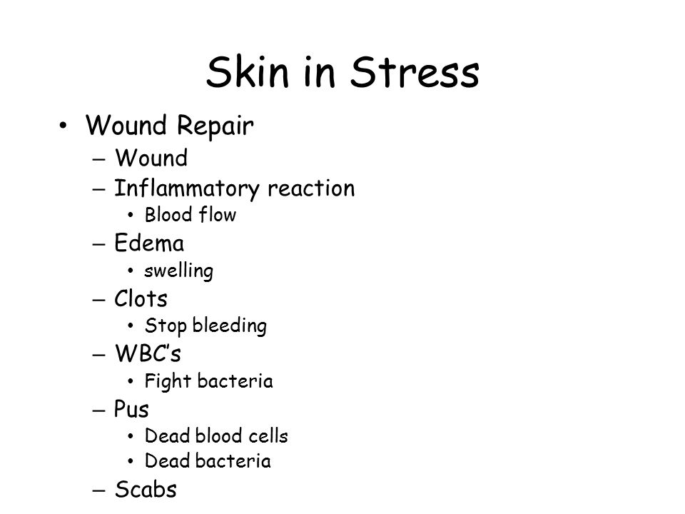 Skin in Stress Wound Repair – Wound – Inflammatory reaction Blood flow – Edema swelling – Clots Stop bleeding – WBC's Fight bacteria – Pus Dead blood
