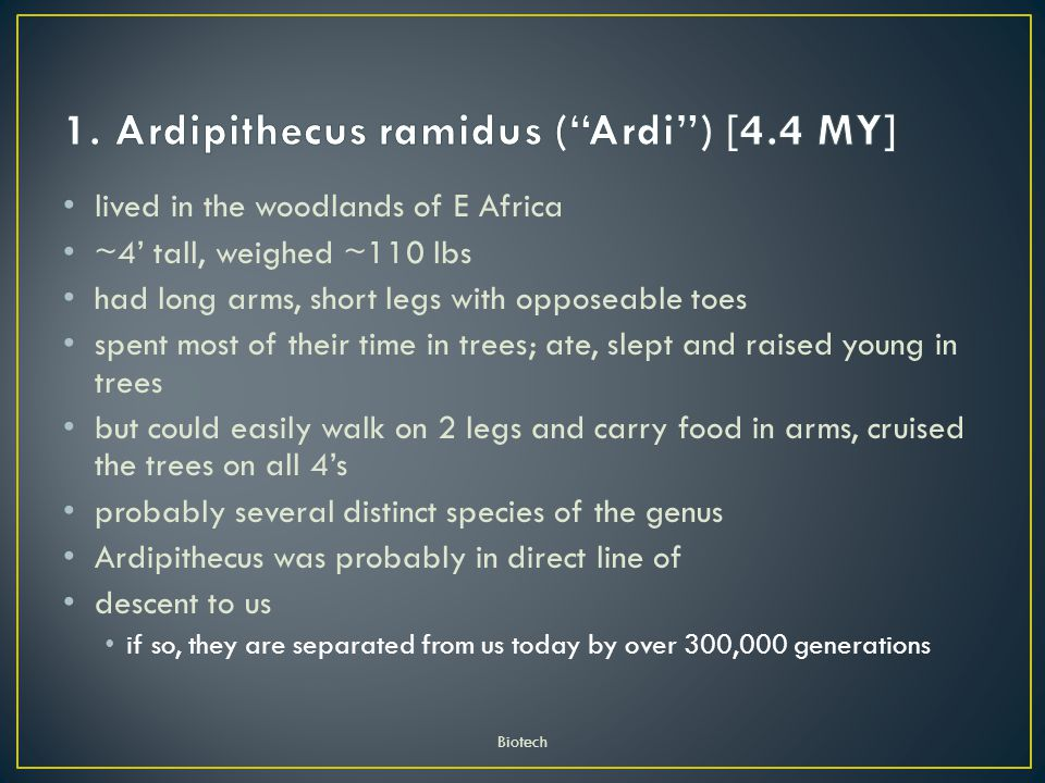 lived in the woodlands of E Africa ~4' tall, weighed ~110 lbs had long arms, short legs with opposeable toes spent most of their time in trees; ate, slept and raised young in trees but could easily walk on 2 legs and carry food in arms, cruised the trees on all 4's probably several distinct species of the genus Ardipithecus was probably in direct line of descent to us if so, they are separated from us today by over 300,000 generations Biotech