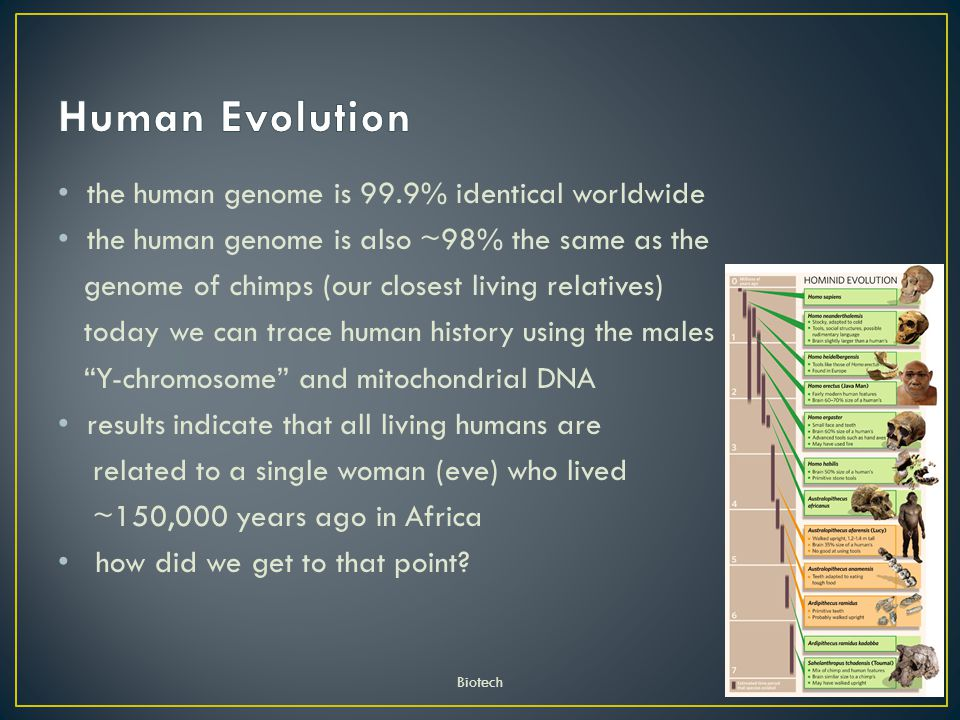 the human genome is 99.9% identical worldwide the human genome is also ~98% the same as the genome of chimps (our closest living relatives) today we can trace human history using the males Y-chromosome and mitochondrial DNA results indicate that all living humans are related to a single woman (eve) who lived ~150,000 years ago in Africa how did we get to that point.