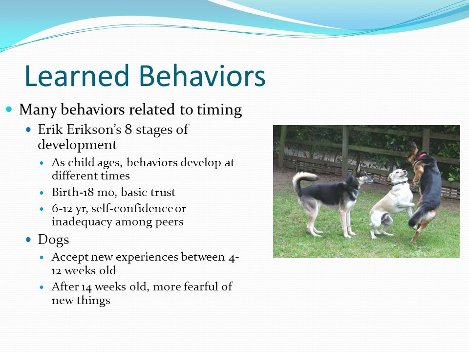 Learned Behaviors Many behaviors related to timing Erik Erikson's 8 stages of development As child ages, behaviors develop at different times Birth-18 mo, basic trust 6-12 yr, self-confidence or inadequacy among peers Dogs Accept new experiences between 4- 12 weeks old After 14 weeks old, more fearful of new things