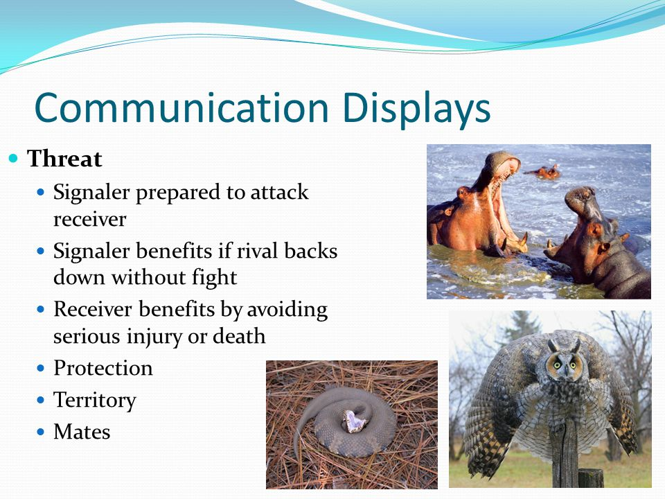 Communication Displays Threat Signaler prepared to attack receiver Signaler benefits if rival backs down without fight Receiver benefits by avoiding serious injury or death Protection Territory Mates