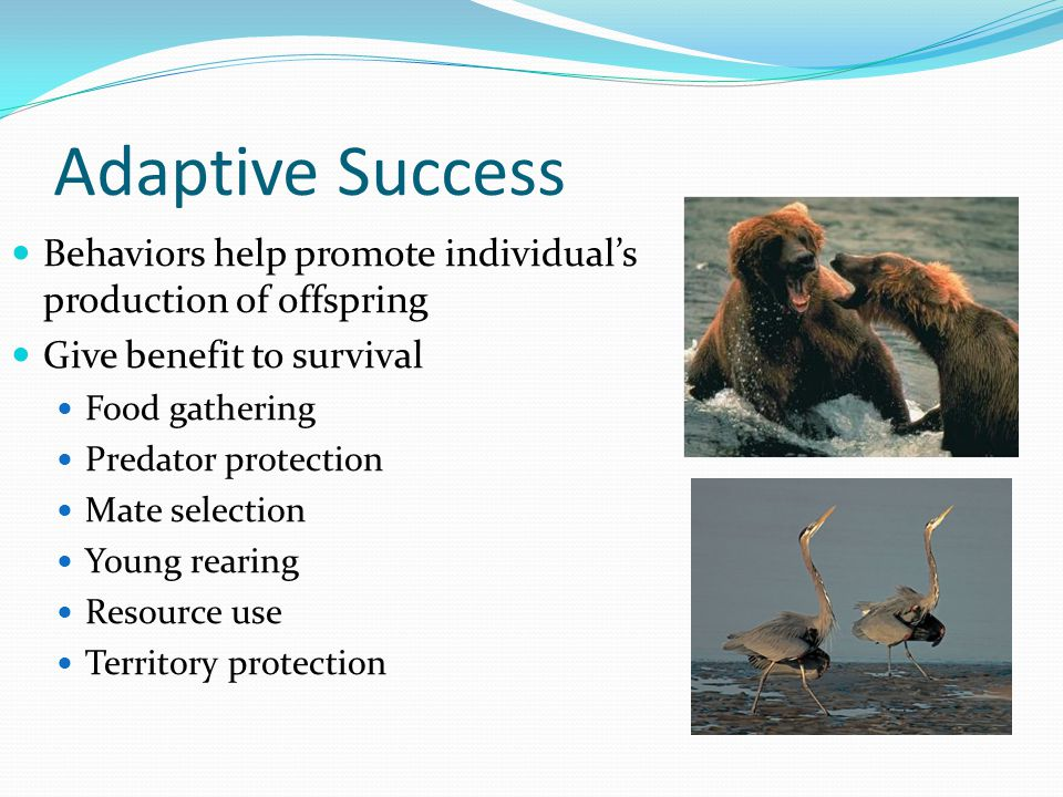 Adaptive Success Behaviors help promote individual's production of offspring Give benefit to survival Food gathering Predator protection Mate selectio